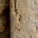 Защо е полезно сусамовото брашно?